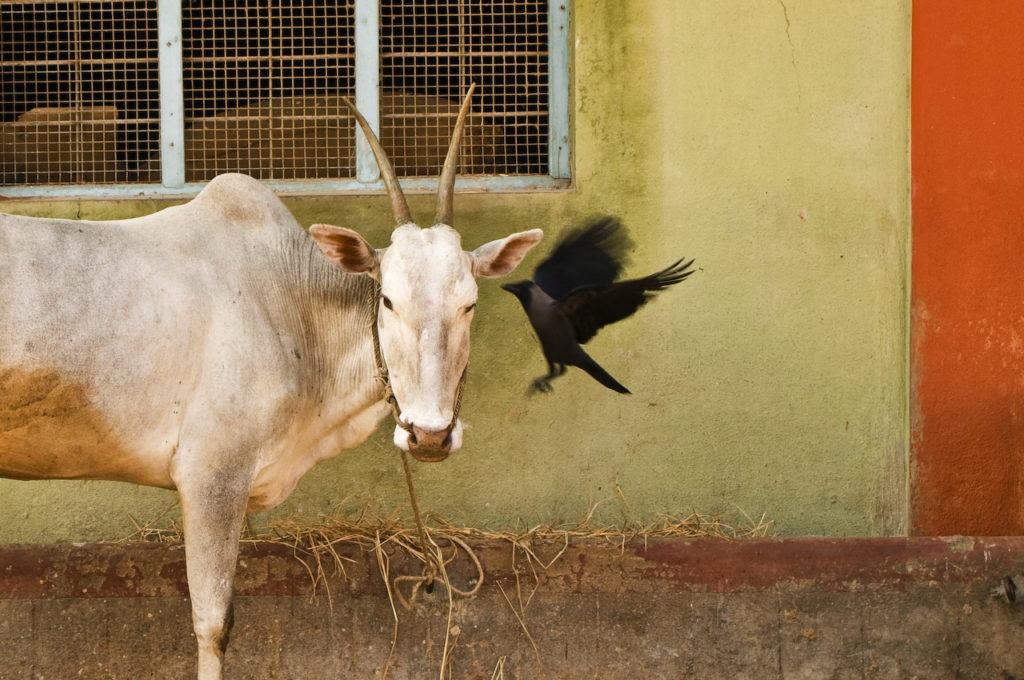 INDIA-3484_RMartin