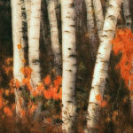 Trees_Birch trees_Lowepro_calendar