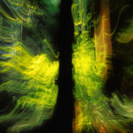 Zoom_Vancouver redwood forest_03_fx