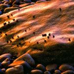 flock of snails ns